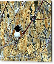 Acrylic Print featuring the photograph Camouflage by Juls Adams