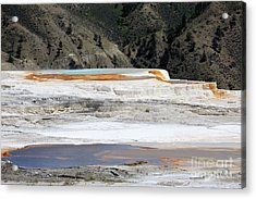 Canary Spring At Mammoth Hot Springs Upper Terraces Acrylic Print by Louise Heusinkveld