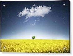 Acrylic Print featuring the photograph Canola Field by Bess Hamiti