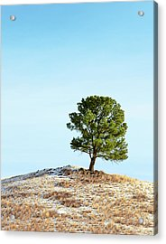 Canted Hilltop Acrylic Print