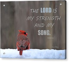 Cardinal In The Snowstorm With Scripture Acrylic Print