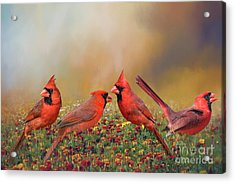 Acrylic Print featuring the photograph Cardinal Quartet by Bonnie Barry