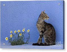 Cat And Flowers In Greece Acrylic Print by Jean-Louis Klein & Marie-Luce Hubert