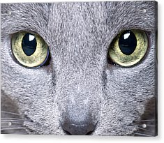 Cat Eyes Acrylic Print by Nailia Schwarz