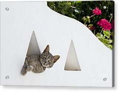 Cat In A Wall Acrylic Print by Jean-Louis Klein & Marie-Luce Hubert