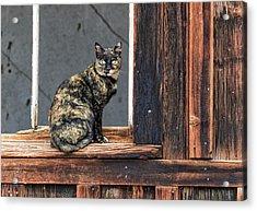 Cat In A Window Acrylic Print
