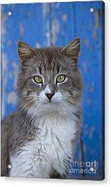 Cat On A Greek Island Acrylic Print by Jean-Louis Klein & Marie-Luce Hubert
