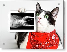 Cat With X Ray Plate Acrylic Print