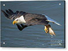 Catch In Hand Acrylic Print by Mike Dawson