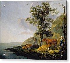 Cattle Near A River Acrylic Print