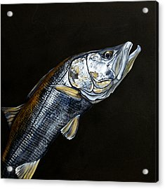 Caught In The Surf Snook Acrylic Print