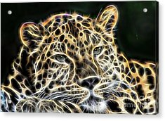 Cheetah Collection Acrylic Print