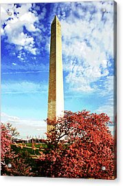 Cherry Blossoms At The Washington Monument Acrylic Print