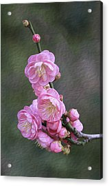 Cherry Flower Acrylic Print