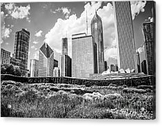 Chicago Skyline At Lurie Garden Black And White Photo Acrylic Print by Paul Velgos