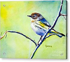 Chickadee Acrylic Print by Joyce A Guariglia