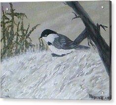 Chickadee Acrylic Print by Rebecca  Fitchett
