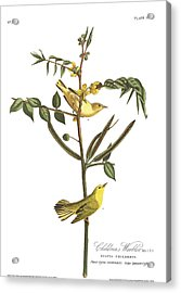 Children's Warbler Acrylic Print by John James Audubon