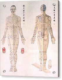 Chinese Chart Of Acupuncture Points Acrylic Print