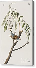 Chipping Sparrow Acrylic Print by John James Audubon