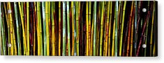 Close-up Of Bamboos, Kanapaha Botanical Acrylic Print