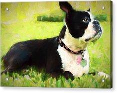 Coco Acrylic Print
