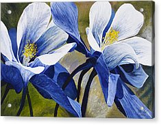 Colorado Columbines Acrylic Print by Aaron Spong
