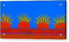 Colorful Potted Plants Mexico Acrylic Print