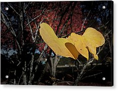 Acrylic Print featuring the photograph Colors Of Fall by Joseph G Holland