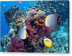 Coral Reef Scenery With Fish Acrylic Print by Georgette Douwma