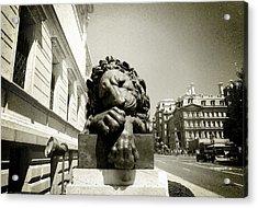 Corcoran Lion Acrylic Print
