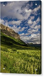 Corn Lily Meadow In Full Bloom At Gothic Mountain, Crested Butte Acrylic Print