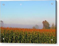 Cornfield Moonset Acrylic Print