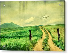 Country Roads Acrylic Print by Darren Fisher