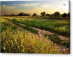 Countryside Landscape Acrylic Print