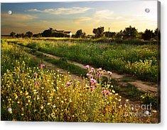 Countryside Landscape Acrylic Print by Carlos Caetano