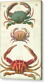 Crabs And Lobsters Acrylic Print