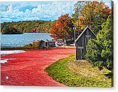 Cranberry Bog Acrylic Print by Gina Cormier