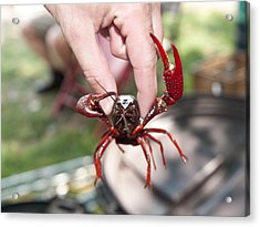 Crawfish Acrylic Print