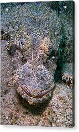 Crocodile Fish Acrylic Print