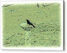 Crow And Bath Acrylic Print