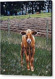 Acrylic Print featuring the painting Curious Calf by Rick McKinney