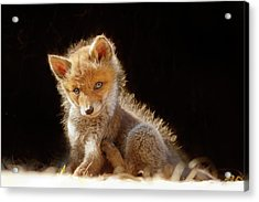 Cute Baby Fox Acrylic Print by Roeselien Raimond