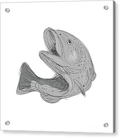 Cutthroat Trout Jumping Drawing Acrylic Print