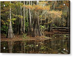 Cypress Trees In Caddo Lake Acrylic Print
