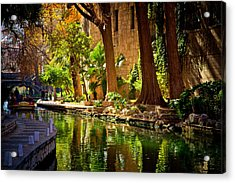 Cypress Trees In The Riverwalk Acrylic Print