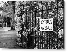 Cyprus Avenue Belfast As Made Famous By The Van Morrison Song Acrylic Print