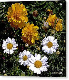 Daisies And Marigolds Acrylic Print