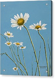 Daisies In The Wind Acrylic Print