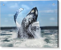 Dances With Whales Acrylic Print by Nancy Dempsey